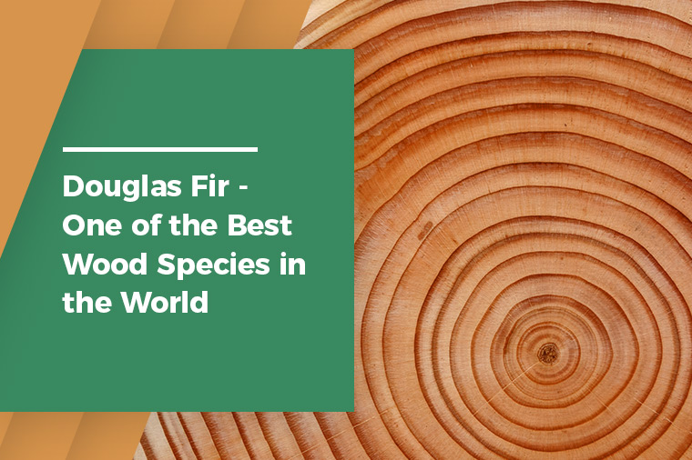 Douglas Fir - One of the Best Wood Species in the World